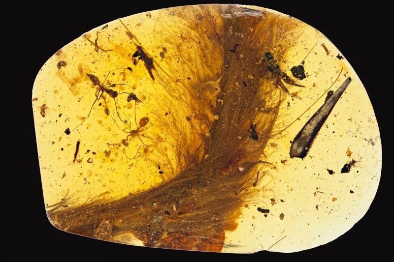 科學家發現有史以來第一件琥珀中的恐龍標本(Credit: Ryan McKellar/Royal Saskatchewan Museum)
