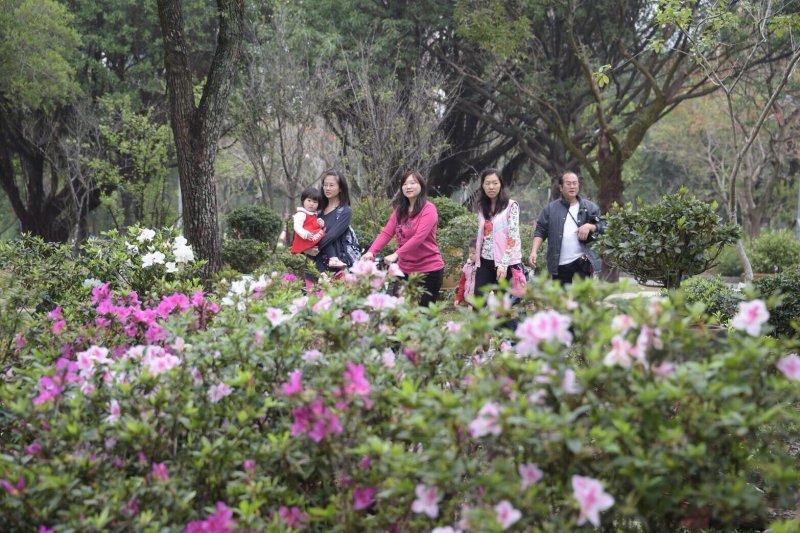 春天將至,台北市的杜鵑花也陸續綻放。(台北市政府提供)