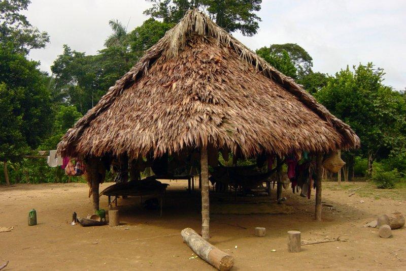 玻利維亞亞馬遜地區提斯曼(Tsimané)的原住民部落,是全世界心血管最健康的一群人(AP)