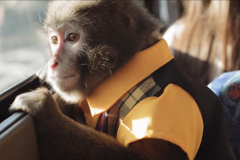 日本九州大分縣最新觀光宣傳廣告主角是這隻猴子。(翻攝自youtube)