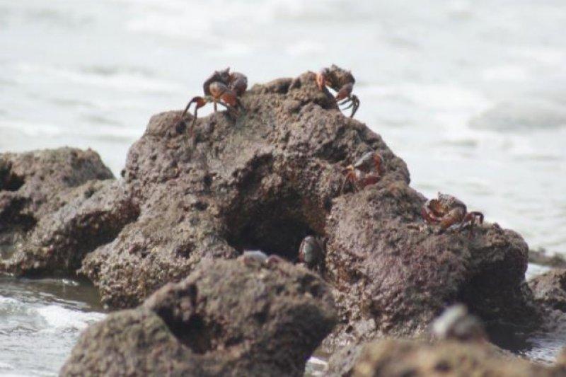 環保團體發起搶救桃園大潭藻礁活動。(資料照,圖取自「大潭藻礁不要說再見」連署活動網站)