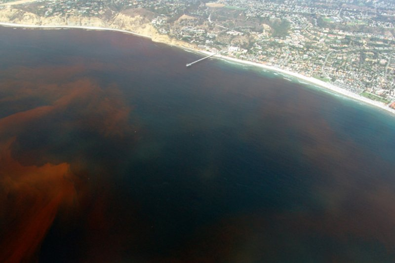 死亡區(dead zone)是氧氣稀缺的水域,形成主因是人類活動造成的營養鹽汙染,圖為加州外海。(Wikipedia/Public Domain)