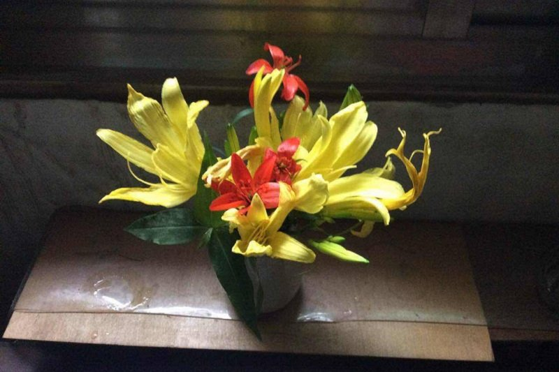 囚徒金黃的無憂花和鮮紅的野百合。(寇延丁提供)