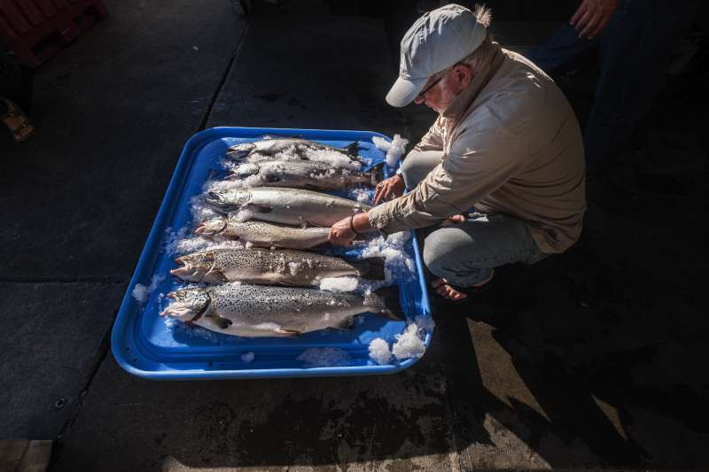 海洋魚類吃下塑膠垃圾,並隨著食物鏈累積至人體內。(美聯社)