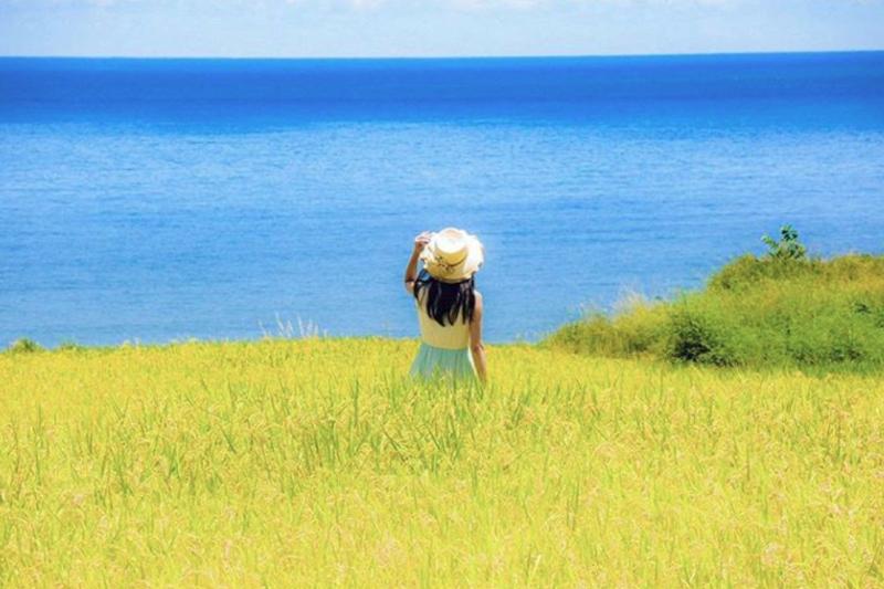 海邊的稻穗風景,又藍又黃,美得讓全台灣都嚮往!(圖/經授權取自molly888666@Instagram,請勿任意使用)