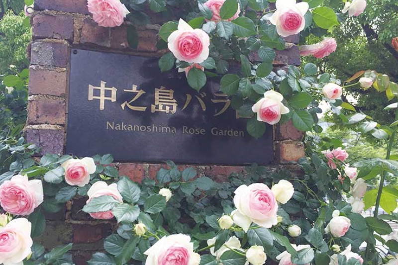 整個中之島公園最有看頭的設施就是這美麗的玫瑰園!(圖/樂吃購!)