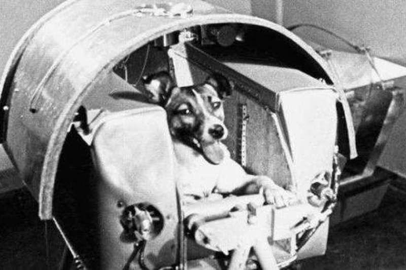 萊卡是最早進入地球軌道的動物,牠的無辜犧牲,促成了人類首次的太空之旅。(圖/澎湃新聞提供)