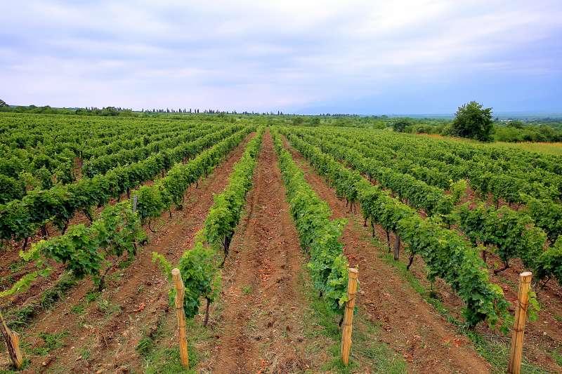 喬治亞東部卡赫季州是重要的葡萄酒產區,這是該州一處葡萄園(Chateau Zegaani@Wikipedia / CC BY-SA 2.0 )