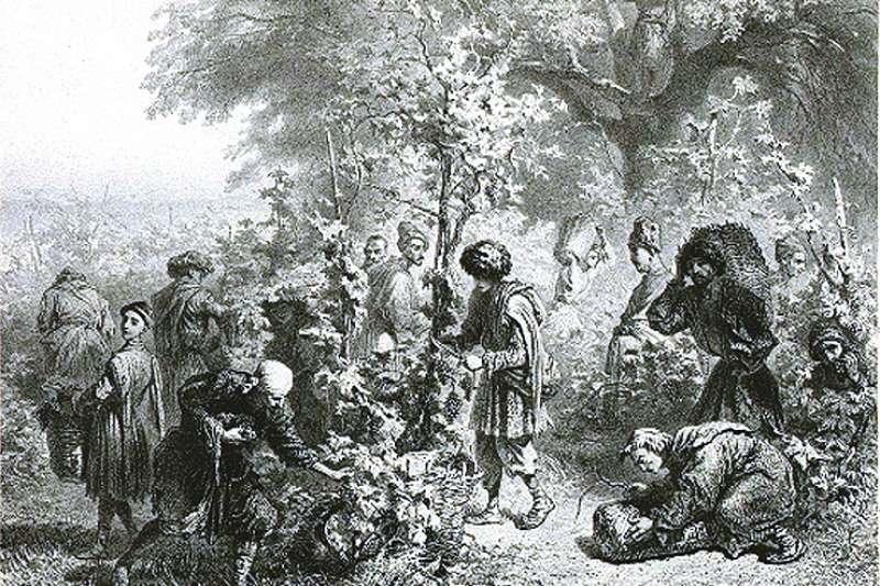 19世紀的俄羅斯畫家加加林(Grigory Gagarin)畫出喬治亞人採收葡萄的情景(Wikipedia/Public Domain)