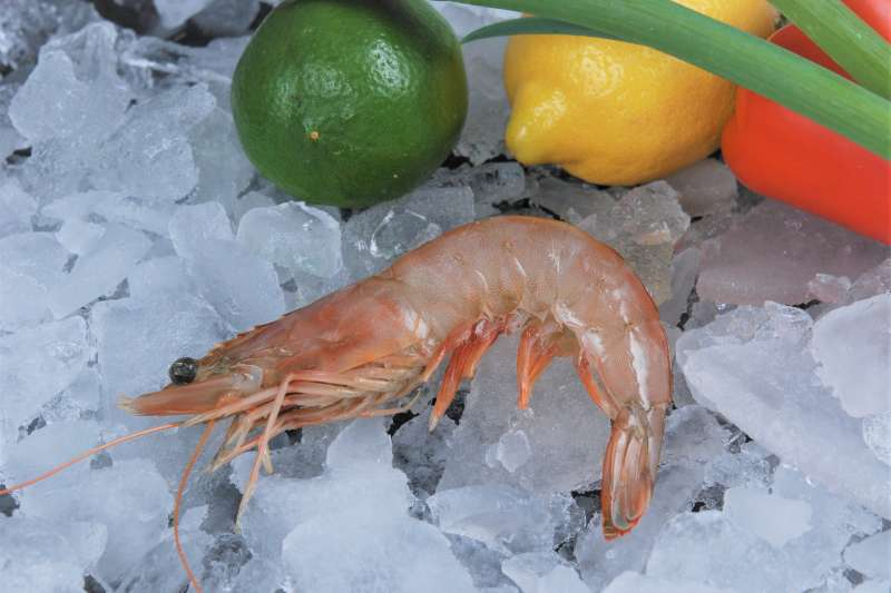 蝦頭變黑並非不新鮮,而是由於蝦子體內的多酚氧化酵素會催化酪胺酸代謝而產生黑色素,並不是不新鮮。(圖/Louisiana Sea Grant College Program Louisiana State University@flickr)