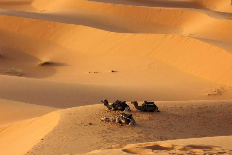 撒哈拉沙漠。(美聯社)