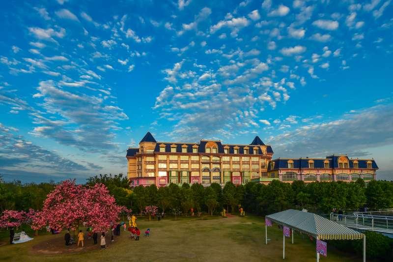 在廣州南沙自貿區百萬葵園景區,綻放的洋紫荊與藍天白雲相映。(新華社)