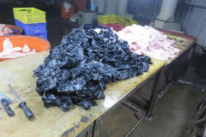 新北市政府衛生局接獲線報,2日凌晨協同台北市調查處前往八里區地下豬頭皮工廠實施行政稽查,發現業者從去年2月開始,涉嫌利用瀝青脫毛,估計1年來,共售出219噸,流向台北市環南市場與麵攤等商家販售。(新北市政府衛生局提供)