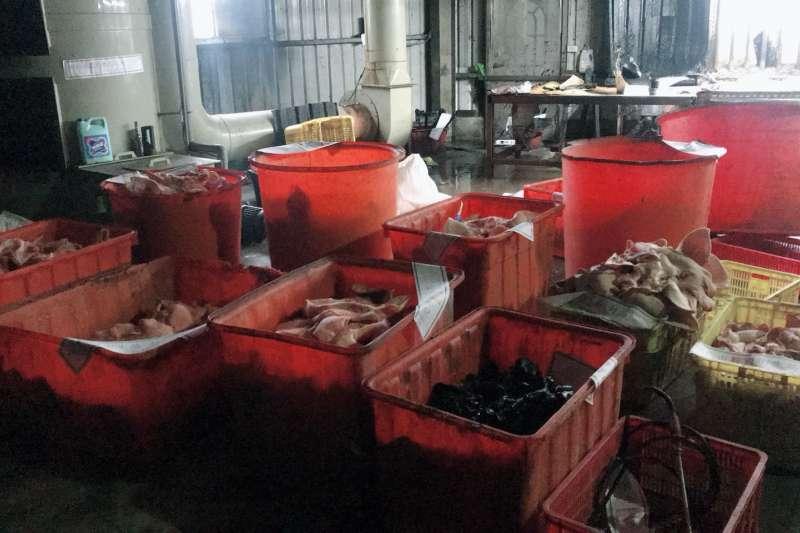 台北市調查處與新北市政府衛生局現場封存800公斤豬頭皮原料,並下令業者暫停作業。(台北市調查處提供)