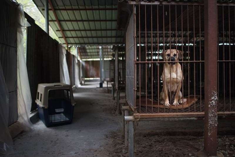 最近幾年韓國狗肉貿易規模正在縮小。圖中的農場於2016年被美國動物保護團體關閉。(BBC中文網)