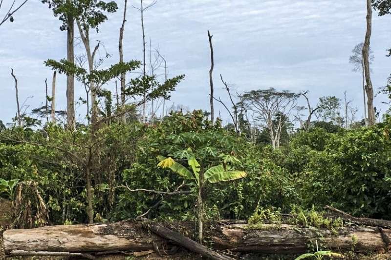 因種植可可樹而遭到濫墾的雨林。(截自Mighty Earth)