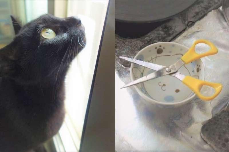 「剪刀找貓法」是在愛貓人中口耳相傳的傳說,如果貓不見了,只要擺出這個陣法,就會有神秘力量帶牠平安回家。(圖/圖左取自侯季然臉書;圖右公視時光台灣提供)