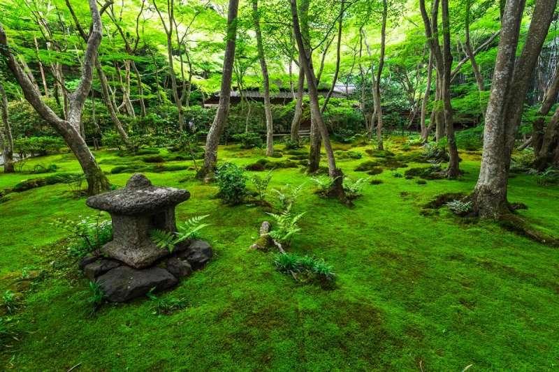 雖然祇王寺被稱為悲涼愛情之寺,卻讓人想感謝那位賢淑女子將她的悲傷轉化為美景,而不是滋生出憎恨呢。(圖/ZEKKEI Japan)