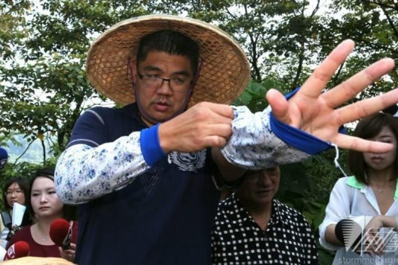 台北市長參選人連勝文17日上午參觀貓空有機茶園,並化身茶農親自下海採茶。(余志偉攝)