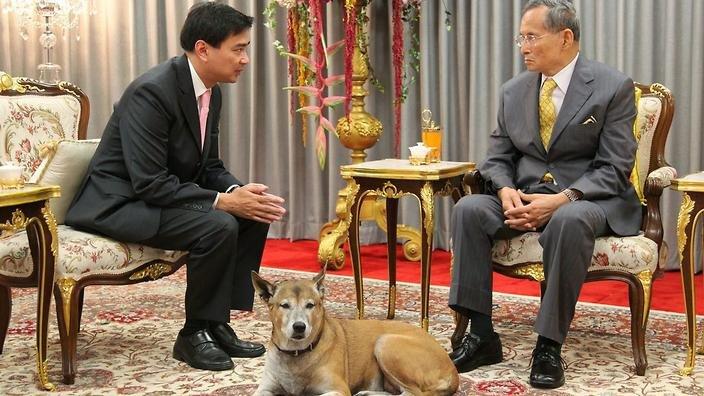 泰男臉書辱皇室遭起訴37年 罪名之一是「諷刺泰皇的狗」。(取自推特)