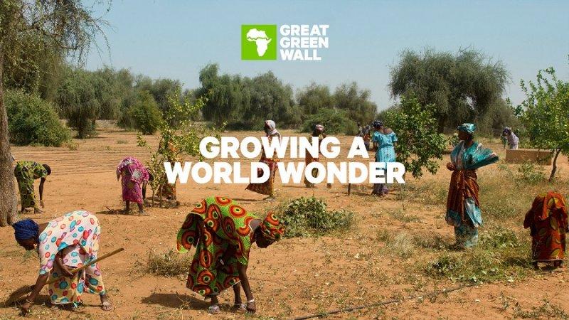 參與綠色長城計畫的人民(Great Green Wall)