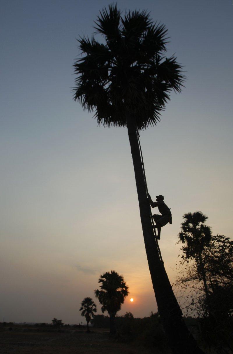 爬樹。(美聯社)