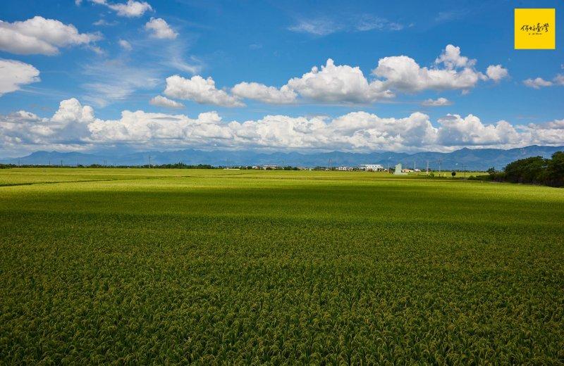 一望無際的嘉南平原,是臺灣的穀倉。
