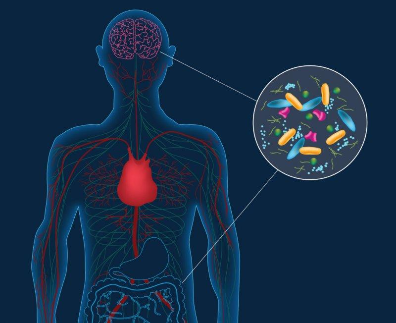 巴金森氏症的真正元凶可能不在腦部,而在你的腸胃!(Caltech)
