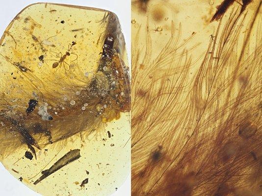 伊娃標本,羽支分支結構的特寫(中國地質大學)
