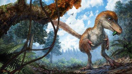根據琥珀復原的手盜龍類恐龍(中國地質大學)