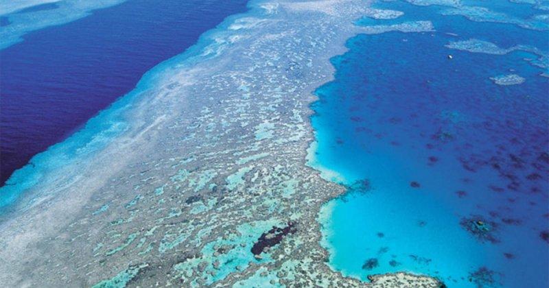 澳洲大堡礁面臨嚴重的大規模白化現象(AP)