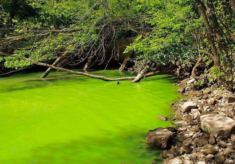 受到優養化的河川,對於水資源是非常長期、嚴重的破壞(圖/擷取自維基百科)