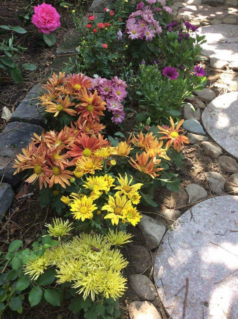 院子裡瘋瘋開放的花,怎麼看怎麼不像閉門思過犯罪嫌疑人的標配。(寇延丁提供)