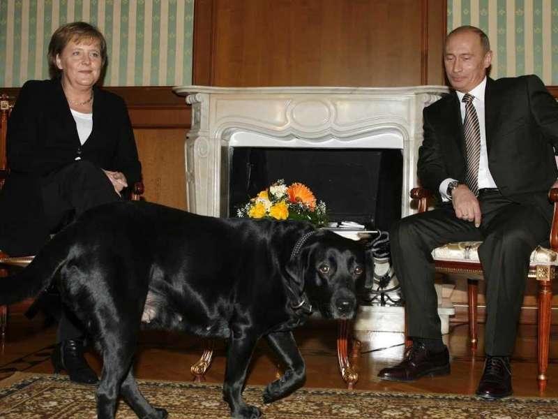 2007年德國總理梅克爾與俄羅斯總統普京會晤,普京的愛犬闖入會議室。(美聯社)
