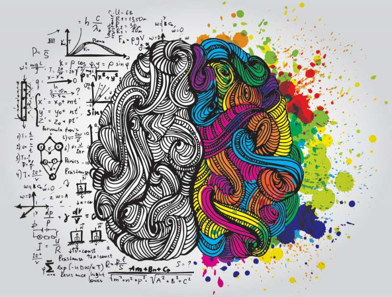 但是說到運作,整個大腦的確是同時進行的,不分左右,即使在你喝醉的時候也一樣。(圖/言人提供)
