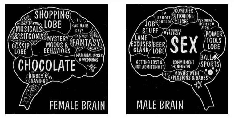 大腦裡有一個叫腦回的區域,負責女性特質的培育,女性的腦回比男性的要更大些。(圖/言人提供)