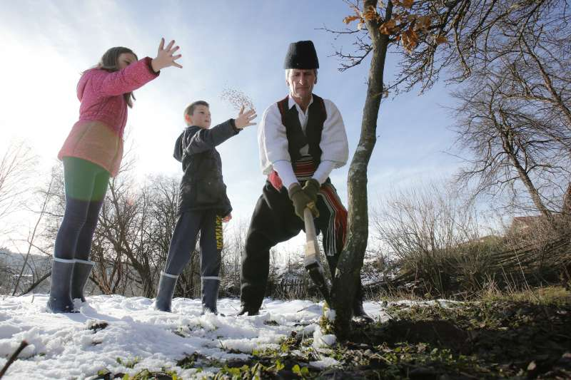 砍倒耶誕樹後,要往樹灑麥子表達敬意。(美聯社)
