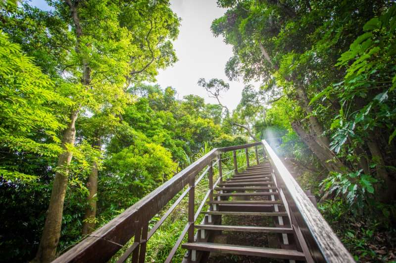 登山步道兩側的盎然綠意,是源源不絕的大自然芬多精(圖/合登上豪提供)