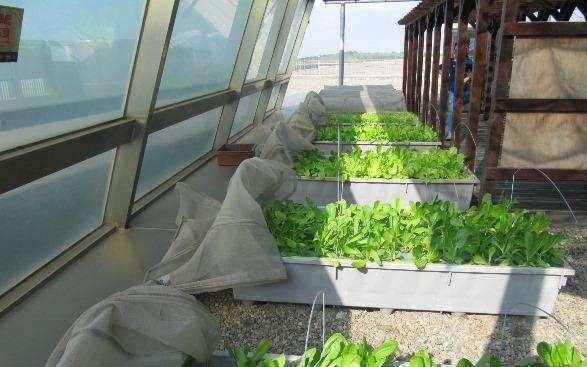 在清水服務區二樓的屋頂廣場也創始引進「魚菜共生區」,將魚的排泄物轉化為水耕蔬菜植物的液態肥料,具有環保教育功能。(圖/清水服務區)