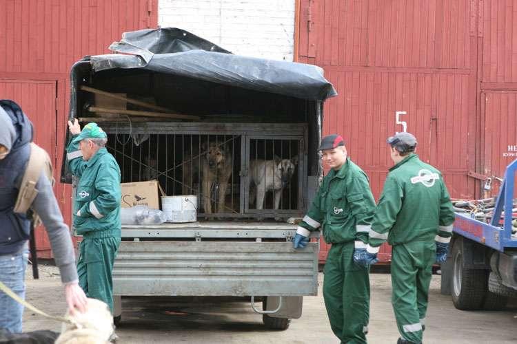 動保人士認為,一味抓捕不是減少流浪動物的好方法。(圖截自俄羅斯動保組織LAPA網站)