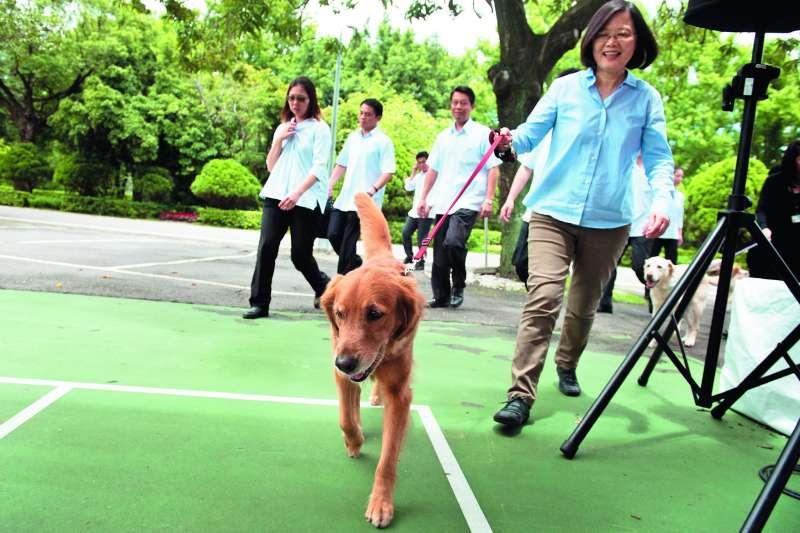 「蔡媽媽」(前)偶爾會帶著狗兒女們來個小散步。(總統府提供)