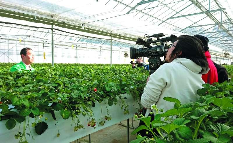 位於福島的大野草莓園,目前已恢復9成獲利 。(潘彥瑞攝)