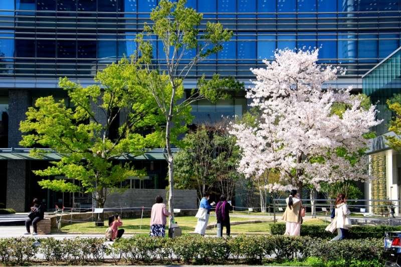 「剛櫻」已成為KinKi Kids的粉絲們心中,最可愛、最親切的潛在賞花名所。(圖/想想論壇提供)