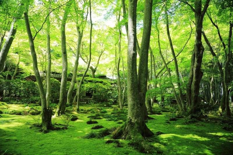祇王寺,是非常適合療癒心靈的優美寺院。(圖/ZEKKEI Japan)