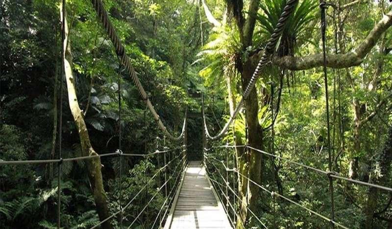 亞熱帶雨林。(圖/HotelsCombined提供)