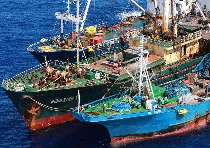 綠色和平指出,由於目前全球市場的「血汗海鮮」其實與台灣政府寬鬆縱容的查核、水產貿易龍頭「豐群水產」脫不了關係,因此進一步調查2014年遭柬埔寨法院判刑確定之「巨洋案」等3案。(綠色和平提供)