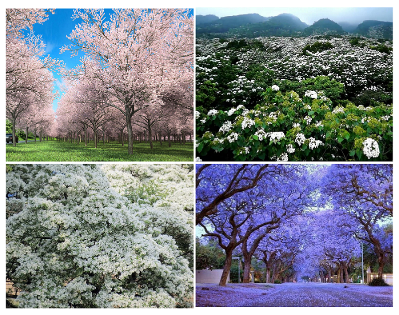 光之系列以新北市三芝-櫻花、桃園富岡-油桐花、台中寶山-流蘇以及高雄藍花楹作為主題植栽,營造綠意充沛、親近自然的建築環境。(此為3D示意圖,請以實品為主。)