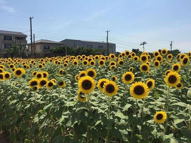 向陽農場(圖/IG@maydaywandy)