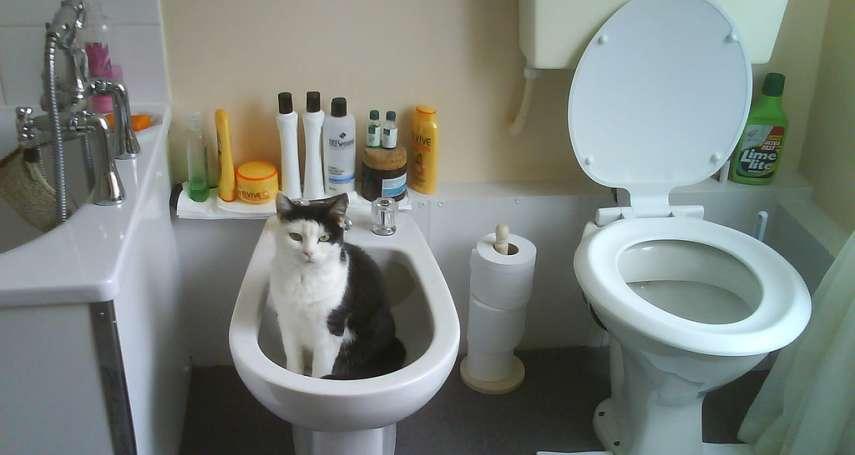 歐洲廁所為什麼有兩個馬桶?其中一個不是上廁所用的,別坐錯!