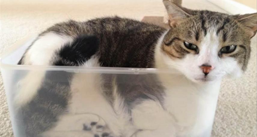 2017搞笑諾貝爾獎出爐!獲獎人竟研究貓咪是液體還是固體,還有其他研究也讓眾人笑翻啦